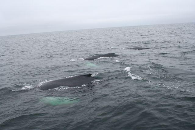 whale31